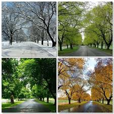 seasons of trees