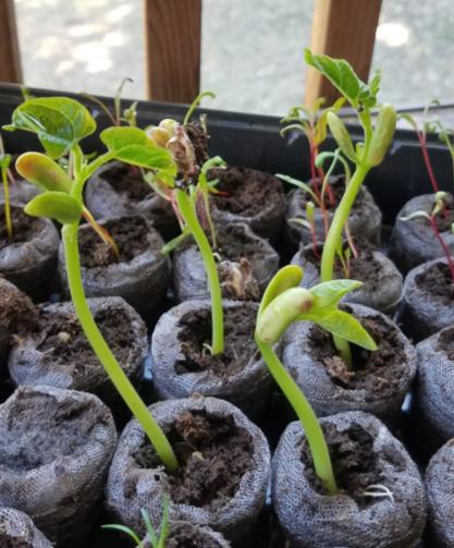 Week 4 Beans